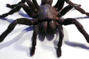 Spider Spinne Inspiration Nicola Scholz München