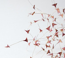 <h7>untitled, 2007, Brooch, Thorns, Gold</h7><br />o.T., 2007, Brosche, Dornen, Gold<br /><br />Foto: Mirei Takeuchi